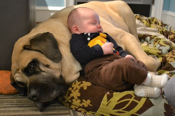 20 Big Dogs with Babies 37