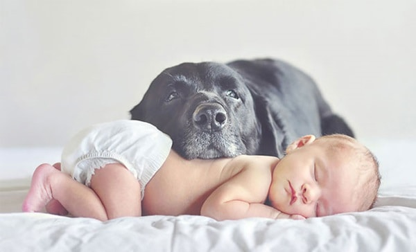 20 Big Dogs with Babies 39