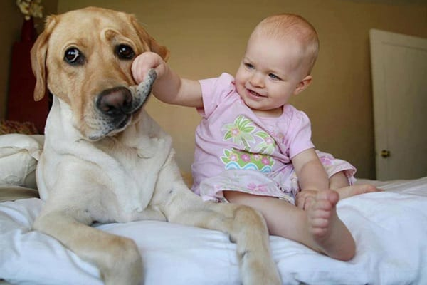 20 Big Dogs with Babies 4