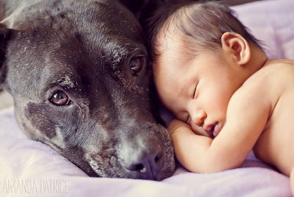 20 Big Dogs with Babies 41