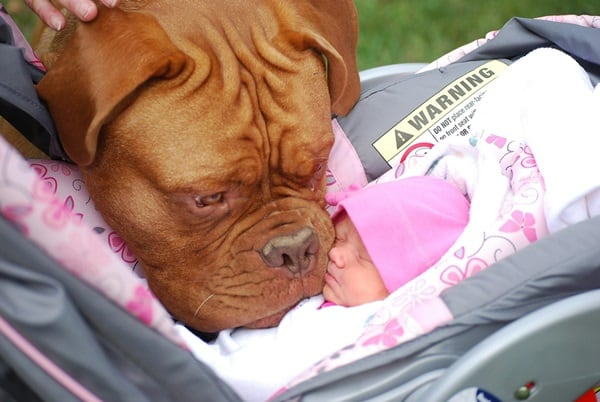 20 Big Dogs with Babies 6