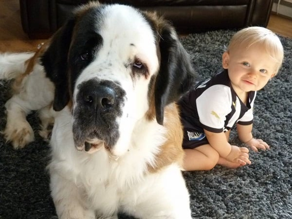20 Big Dogs with Babies 7