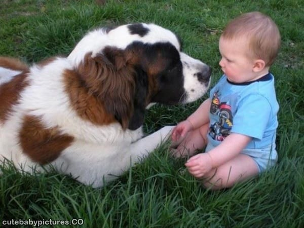 20 Big Dogs with Babies 9