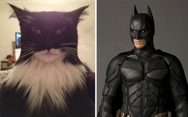 20 Cats that Looks like Other Things 1