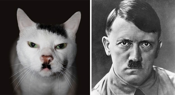 20 Cats that Looks like Other Things 2