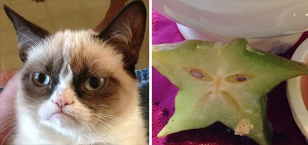 20 Cats that Looks like Other Things 23