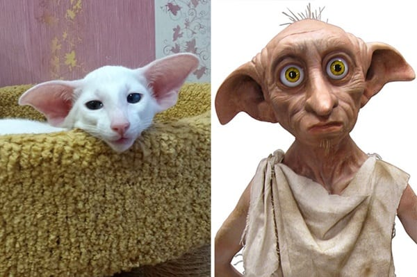 20 Cats that Looks like Other Things 5