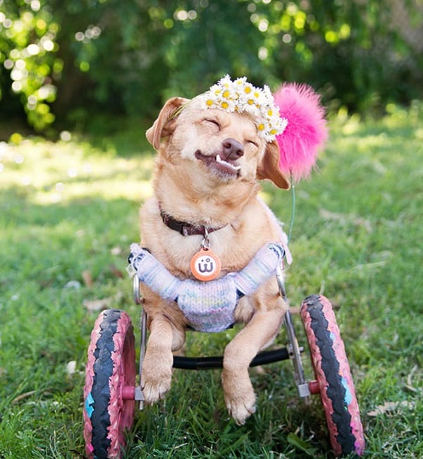 30 Beautiful Pet Disability Photography 10