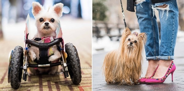 30 Beautiful Pet Disability Photography 19