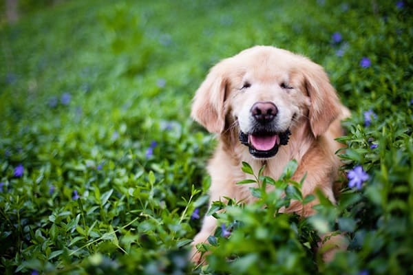 30 Beautiful Pet Disability Photography 2