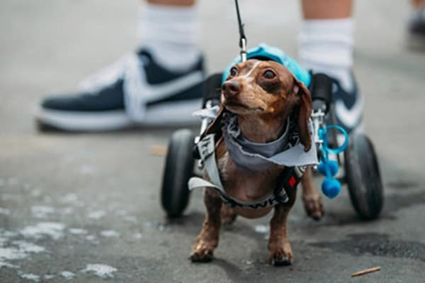 30 Beautiful Pet Disability Photography 30