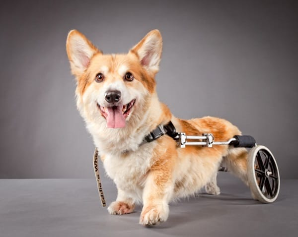 30 Beautiful Pet Disability Photography 4