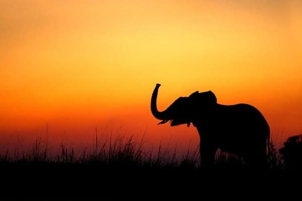 40 Beautiful Animal Photography at Sunset 1