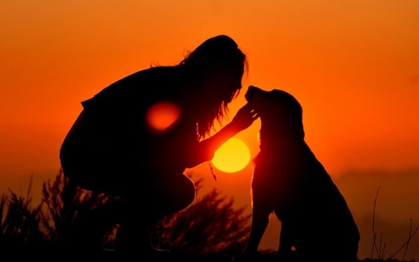 40 Beautiful Animal Photography at Sunset 12