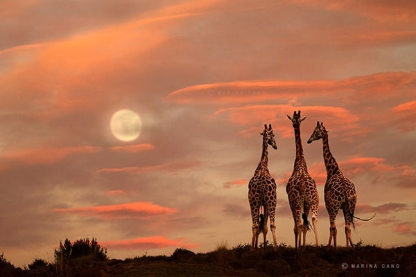 40 Beautiful Animal Photography at Sunset 13