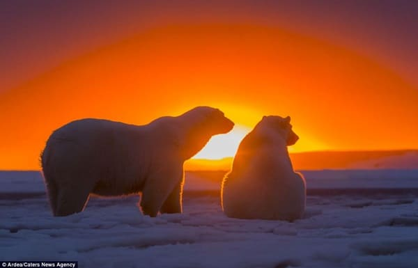 40 Beautiful Animal Photography at Sunset 14