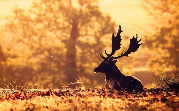 40 Beautiful Animal Photography at Sunset 19