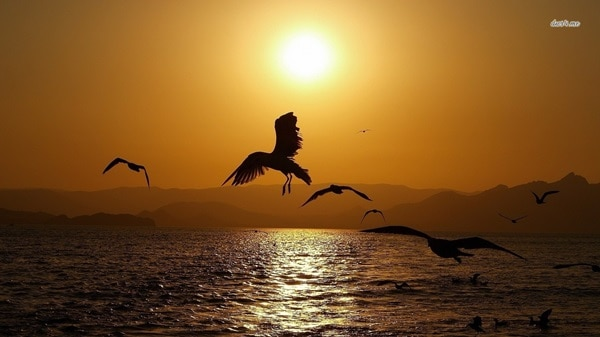 40 Beautiful Animal Photography at Sunset 24