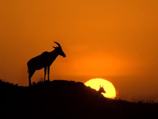 40 Beautiful Animal Photography at Sunset 25