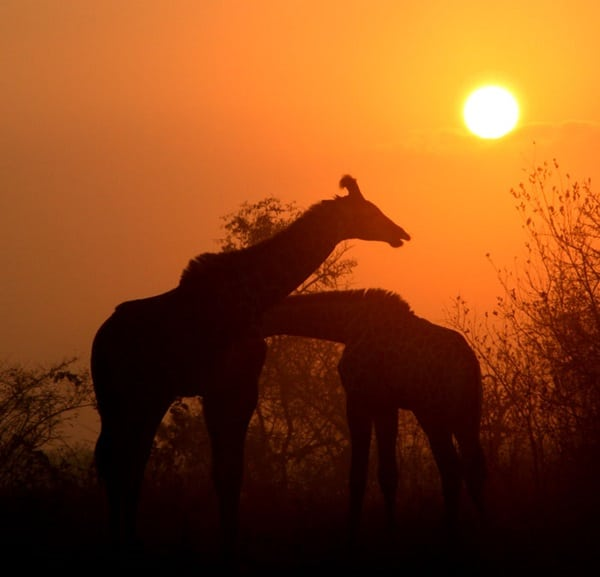 40 Beautiful Animal Photography at Sunset 26