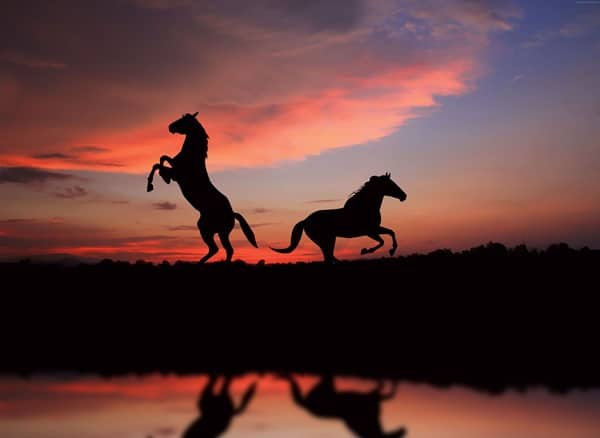 40 Beautiful Animal Photography at Sunset 28