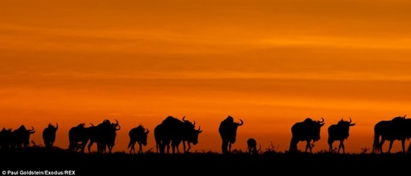 40 Beautiful Animal Photography at Sunset 29