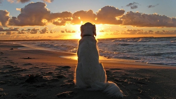 40 Beautiful Animal Photography at Sunset 3