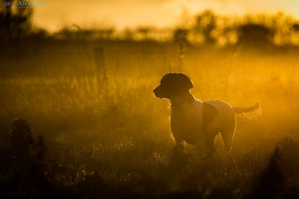 40 Beautiful Animal Photography at Sunset 37