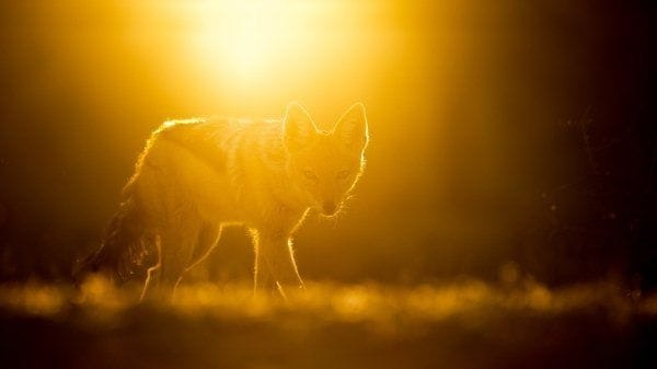 40 Beautiful Animal Photography at Sunset 40