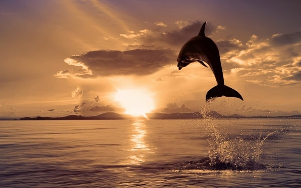 40 Beautiful Animal Photography at Sunset 5