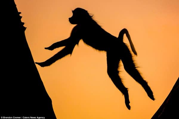 40 Beautiful Animal Photography at Sunset 6