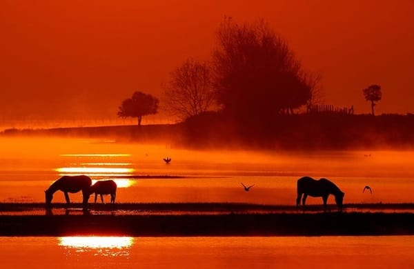 40 Beautiful Animal Photography at Sunset 7