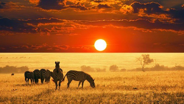 40 Beautiful Animal Photography at Sunset 9
