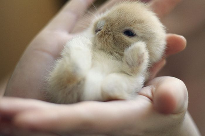 40 Cute Tiny Animal Pictures  (13)