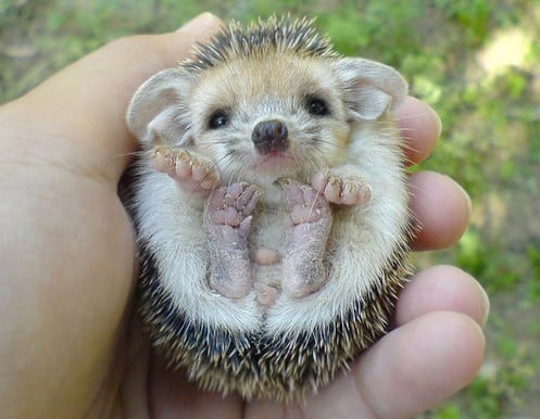 40 Cute Tiny Animal Pictures  (33)