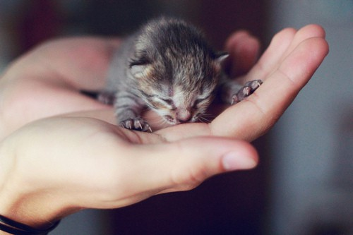 40 Cute Tiny Animal Pictures  (40)