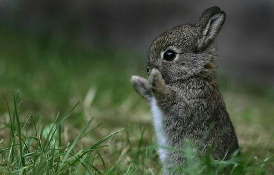 40 Cute Tiny Animal Pictures  (8)
