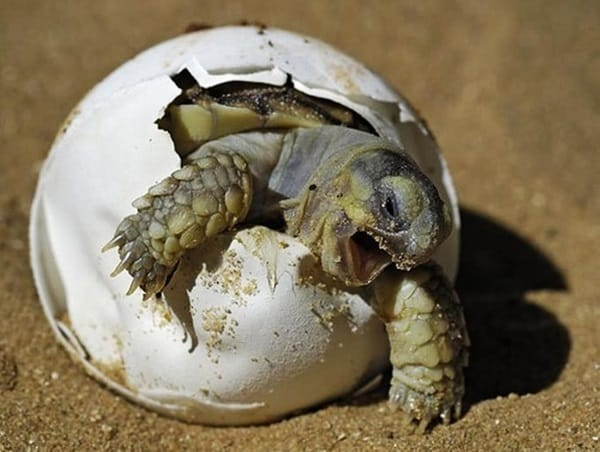 40 Hatching Animal Pictures 16