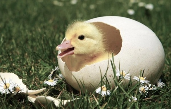 40 Hatching Animal Pictures 24