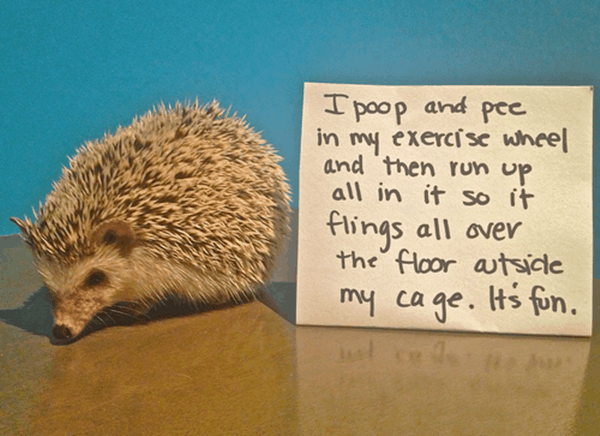 40 Pictures of Animals with Funniest Mistake Messages 27
