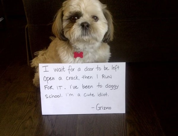 Dog shaming, pet owners put there furry friends on the wall of shame..