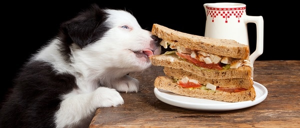 40 Pictures of Dogs Having Meals 40