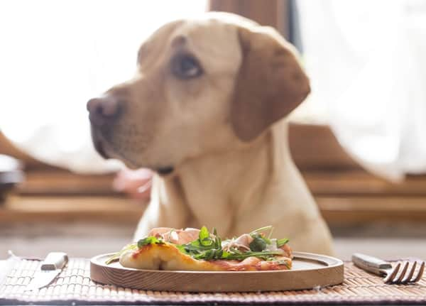 40 Pictures of Dogs Having Meals 5