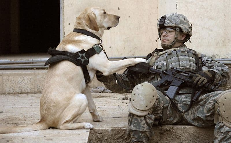 40 Sizzling Pictures of Military Service Dogs  (1)