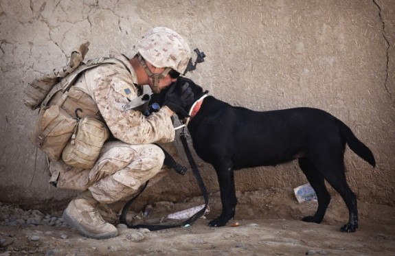40 Sizzling Pictures of Military Service Dogs  (10)