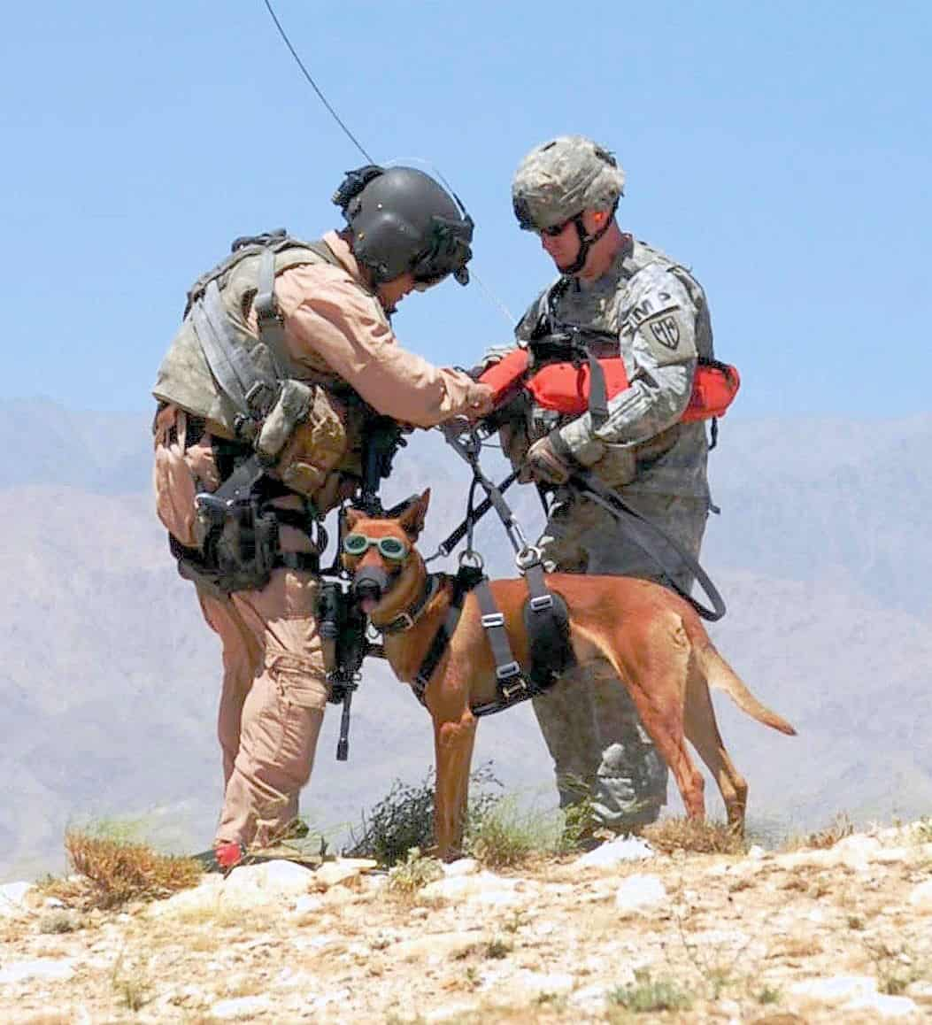 40 Sizzling Pictures of Military Service Dogs  (16)