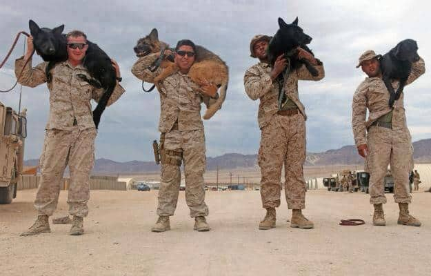 40 Sizzling Pictures of Military Service Dogs  (17)