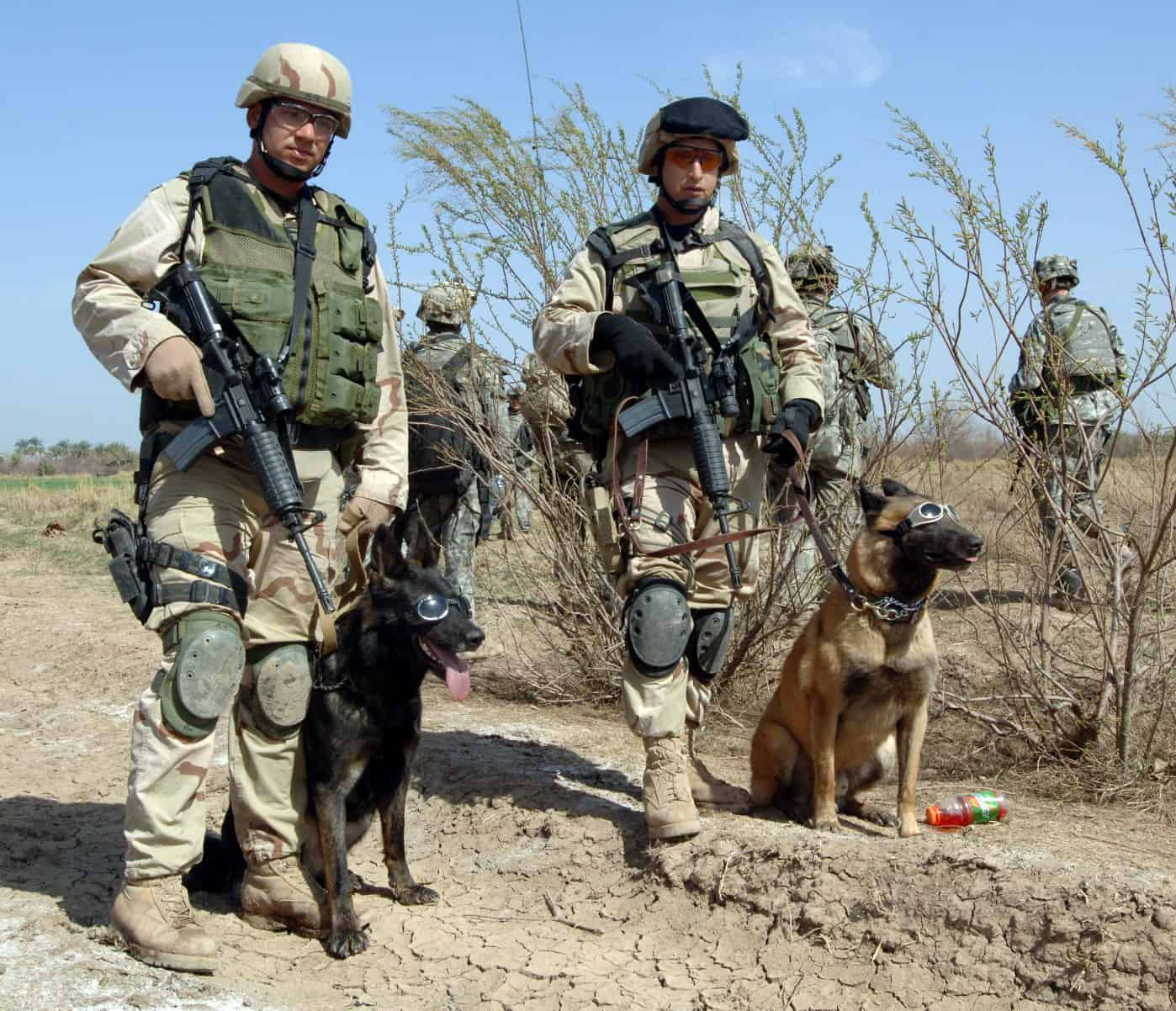 "Tech. Sgt. John Mascolo and his military working dog, Ajax, left, await a helicopter pickup with Staff Sgt. Manny Garcia and his dog, Jimmy, outside Forward Operating Base Normandy, Iraq, on Tuesday, Feb. 28, 2006. The dogs are wearing ""doggles"" to prevent sand and debris from getting in their eyes during sandstorms or when near helicopters. The 35th Security Force Squadron Airmen and their dogs had completed a security sweep of a farmhouse looking for weapons and materials used to make improvised explosive devices. (U.S. Army photo/Pfc. William Servinski II)"