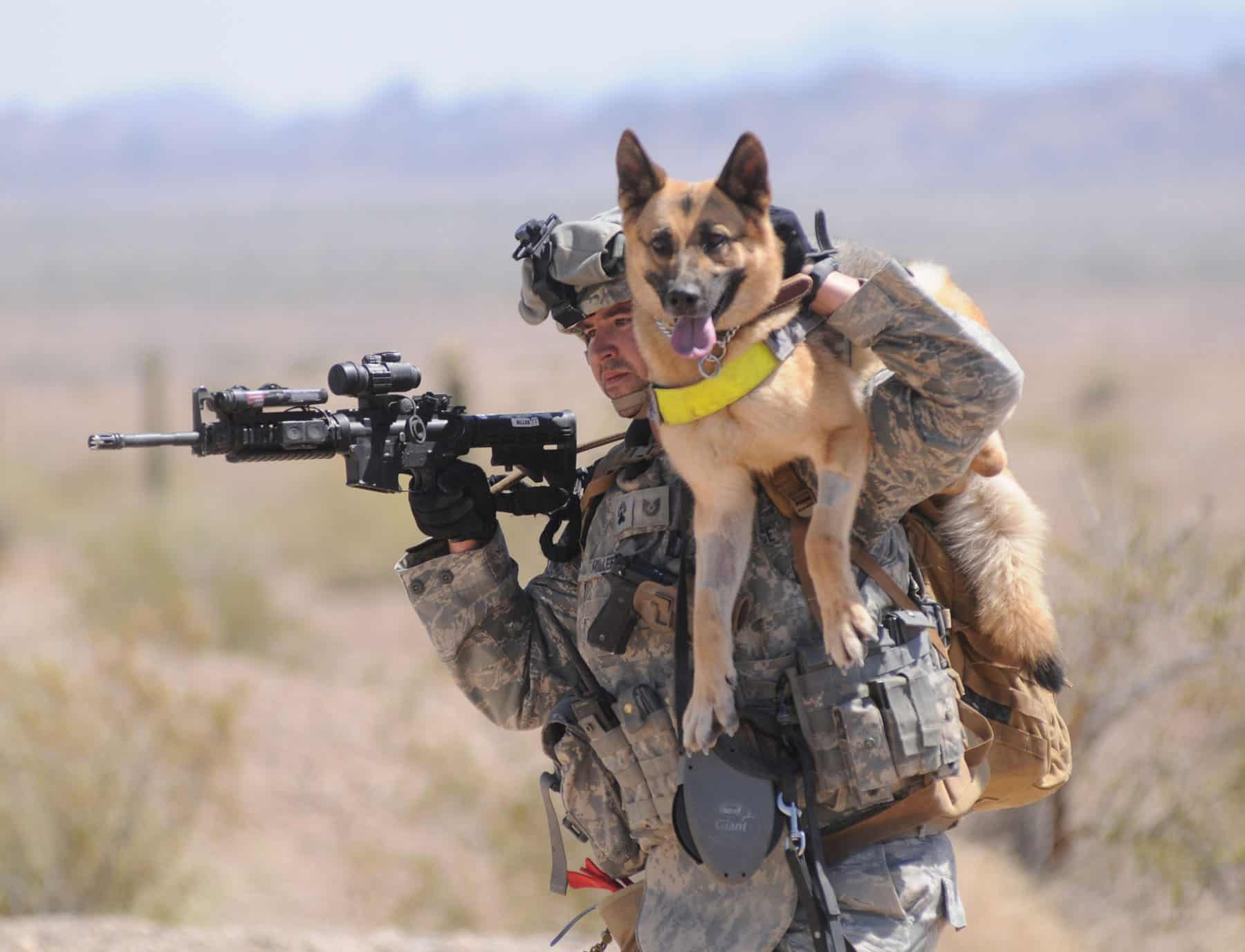 40 Sizzling Pictures of Military Service Dogs  (21)