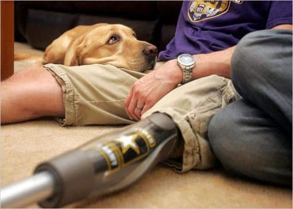 40 Sizzling Pictures of Military Service Dogs  (24)